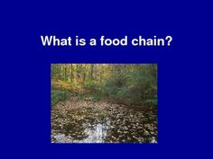 Free resource for teaching food chains and webs.