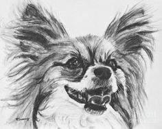 Papillon Drawing - Papillon Dog Drawing by Kate Sumners