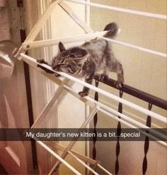 22 Funny Animal Pics That Will Make You Happy   Love Cute Animals