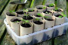 Reciclagem :sementeira