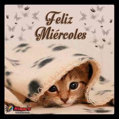 Feliz Miercoles Gatito