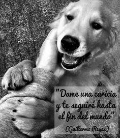 """""""Dame una caricia y te seguiré hasta el fín del mundo""""  (Guillermo Reyes)"""