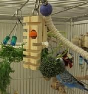 Parrot Enrichment foraging blocks for the girls