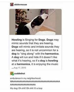Thought me dog was upset but she literally just vibing - dog funny Funny Quotes, Funny Memes, Hilarious, Funniest Memes, Animal Memes, Funny Animals, Adorable Animals, Comedy, Lol