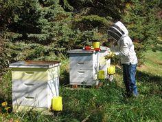 Feeding bees