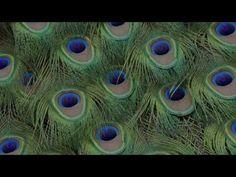 DIANA- Perpetual Surrender, Four Tet Remix (OFFICIAL VIDEO)