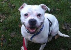 Could you give pet a loving home?