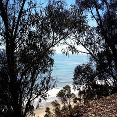 Trek through trees to spectacular beaches in #SantaBarbara.