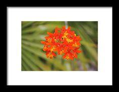 orange, yellow, orchid, flower, bloom, michiale schneider photography