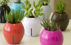 8 Best Indoor Self-Watering Planters For the (Black-Thumbed) Design Lover : TreeHugger