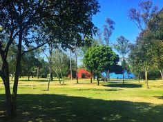 Caminata de ejercicio en la 2a sección de Chapultepec, impecable no le pide nada a otros grandes parques públicos del mundo.  Cielo invernal azul, ni nubes cerca.