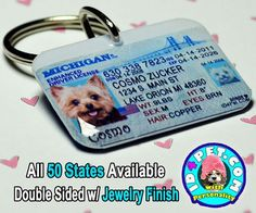 7 more Pins for your dogs board