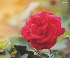 #Colombia #flowers #flower #petal #petals #nature #beautiful #love #pretty #plants #blossom #sopretty #spring #summer #flowerstagram #flowersofinstagram #flowerstyles_gf #flowerslovers #flowerporn #botanical #floral #florals #insta_pick_blossom #flowermagic #instablooms #bloom #blooms #botanical #floweroftheday