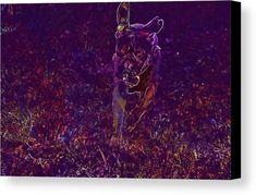 Harley Action Playing Pet Dog Canvas Print / Canvas Art by PixBreak Art Pet Dogs, Pets, Abstract Canvas, Great Artists, Action, Tapestry, Art Prints, Poster, Painting