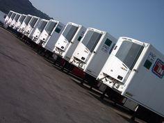 trailer frigo transport torello