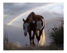 A horse and rainbow in the mist. by darcy