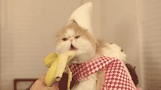 Gif-king is a king of fun sharing website. Find here the latest funny/baby/animal/people/gif images, photos and pictures. Animals And Pets, Funny Animals, Cute Animals, Animal Fun, Funny Cat Videos, Funny Cats, Banana Funny, Animated Gif, Baekhyun