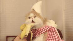 Kombiniere Katzen-GIF mit YouTube-Sound. Das ist das Konzept hinter dem Procatinator.  Mehr Kitty-Content zum Prokatzinieren: Cat-Flakes (via ronny)