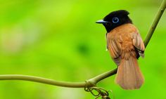 bird images for backgrounds desktop free - bird category