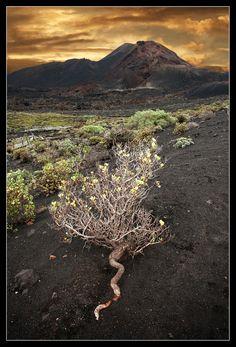 Vulkankrater bei Fuencaliente - La Palma 1 von Werner Kühn - Koditek