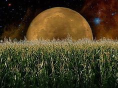 In August, we celebrate the beginning of the Corn Moon. This moon phase is also known as the Barley Moon, and carries on the associations of grain and rebirth that we saw back at Lammastide.  Colors: Yellow, red, orange  Gemstones: Tigers eye, carnelian, garnet, red agate  Trees: Cedar and hazel  Gods: Vulcan, Mars, Nemesis, Hecate, Hathor, Thoth  Herbs: Rosemary, basil, rue, chamomile   Element: Fire  Harness some of the Corn Moon's fiery energy for your ritual and spell work.