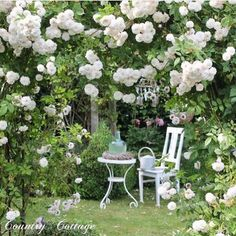 It must smell lovely in the garden designed by ! Beautiful Flowers Garden, Beautiful Roses, Beautiful Gardens, Moon Garden, Dream Garden, White Gardens, Small Gardens, Garden Angels, Rose Cottage