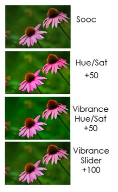 hue/saturation vs vibrance adjustments in photoshop by Lisa Harrison