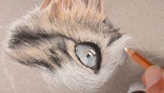 Learn how to draw a cat with pastels in this lesson that uses pastel pencils and traditional soft pastels. Pastel Artwork, Oil Pastel Drawings, How To Draw Fur, Cat Drawing Tutorial, Pastel Pencils, Realistic Drawings, Art World, Animal Drawings, Soft Pastels