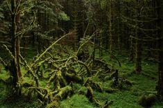 Fotógrafos e florestas (Foto: Brit Aase / Divulgação)