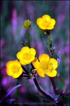 yellow by ValentinaKallias on deviantART