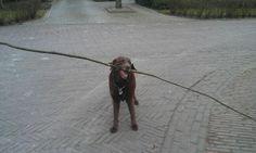 Is de hond te Klein of de stok te groot