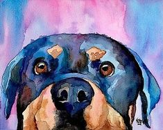 Rottweiler Dog, Corgi Dog, Dachshund Dog, Watercolor Texture, Watercolor Paintings, White Boxer Dogs, Schnauzer Art, Papillon Dog, Wire Fox Terrier