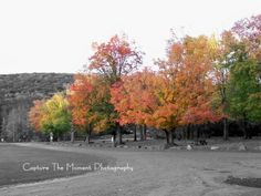 Nature and lanscapes. Allegany State Park, NY in Autumn. Black and white with color accents. Capture the Moment Photography