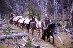 pack mule   brian helms with pack horses mules jim peaco september 2002