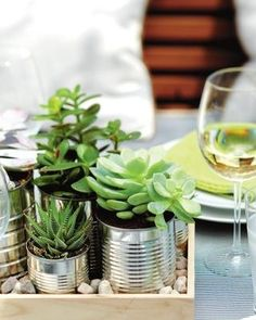 succulents in tins, on a tray, with little   rocks = great table topper/centerpiece/living decoration
