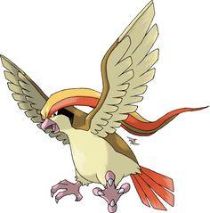 Pidgeot Tipo Normal e Voador