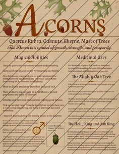 Book of Shadows Pages, Digital Download, Grimoire Pages, Pine, Witches Burr, Acorn, Mistletoe, Holly, Ivy, Instant Download, Green Witch