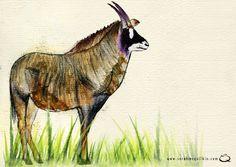 Sarah McQuilkin Illustration - Antelope