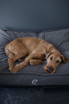 Finnegan on Dog Bed COZY