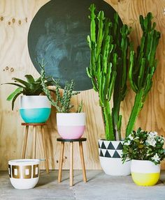 Wood paneling and mix of pots, plants, heights