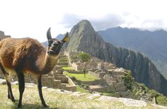 Living the dream - working and traveling at the same time :D Want to know how? Click on the link! #machupiccu #travel #llama #backpacking #planning #funny #humor #mountains #history #cute #derp