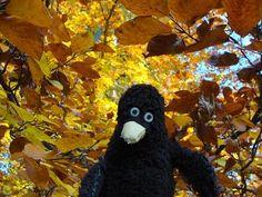 Erwin im goldenen Herbst.
