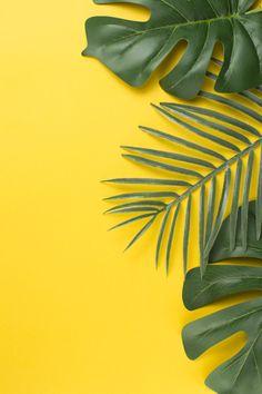 Plant Wallpaper, Framed Wallpaper, Graphic Wallpaper, Iphone Background Wallpaper, Leaf Background, Wallpaper Tumblr Lockscreen, Pastel Wallpaper, Orange Background, Phone Screen Wallpaper