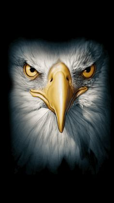 The Power Of ObamaCare: Millions Happy With Their Health Coverage Eagle Images, Eagle Pictures, Beautiful Birds, Animals Beautiful, Aigle Animal, Animals And Pets, Cute Animals, Eagle Face, Eagle Drawing