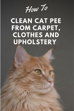 Cleaning Cat Urine, Remove Cat Urine Smell, Cat Pee Smell, Cat Urine Smells, Remove Stains, Cleaning Tips, Cleaning Solutions, Cleaning Products, Cleaning Supplies