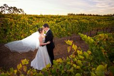 I've always loved the charm of Swan Valley weddings! Here's one of Bec and Brenton amidst the bountiful vineyard of Sittella
