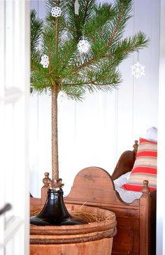 pine branch, snowflakes