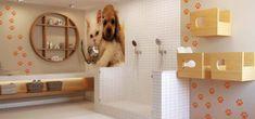 Pet Shop, Building Design Plan, Dog Spa, Dog Grooming Salons, Pet Care, Fancy, Pets, Hospitals, Bedroom