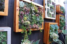 Vertical Garden Fence Decor This is really great! Succulent Frame, Vertical Succulent Gardens, Succulents Garden, Hanging Succulents, Hanging Plants, Succulent Planters, Garden Plants, Vertical Planting, Succulent Ideas