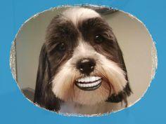 een big smile van Sammeke bij hondentrimsalon Ursi